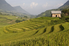 House in rice fields in sapa in vietnam Stock Photo