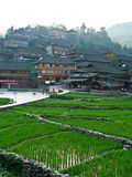 House in the rice fields Royalty Free Stock Photography