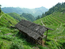 House in the Rice fields Royalty Free Stock Image