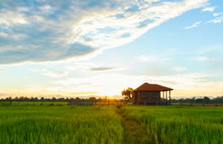 House in rice paddy fields. Royalty Free Stock Photos
