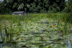 House on the river. Including yellow water lilies Stock Image