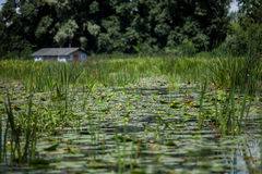 House on the river. Including yellow water lilies Royalty Free Stock Photo