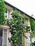 House with roses. Street view of house with roses in Paris, France Stock Images