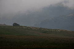 House and sheeps on a hill covered in fog near Sibiu, Romania Royalty Free Stock Image