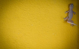 House small lizard - gecko on yellow background texture Royalty Free Stock Photo