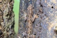House small lizard on the tree Royalty Free Stock Photos