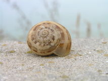 House for snails Stock Images