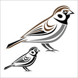 House sparrow. Vector illustration : House sparrow on a white background Stock Image