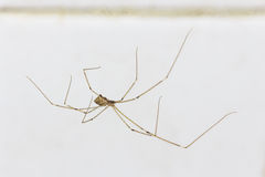 House spider on the wall. The house spider on the wall royalty free stock photo