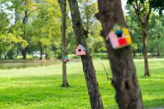 House for squirrels. Man builds a house for squirrels living next to trees. In the park royalty free stock photo