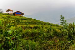 House standing on a rice terrace in Sa Pa, Vietnam stock image