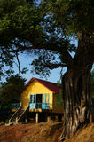 House on stilts under ancient tree Royalty Free Stock Images