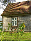 House and sunflowers. Small house and sunflowers in north Poland - Żuławy royalty free stock image