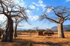House surrounded by baobab trees in Africa Royalty Free Stock Images