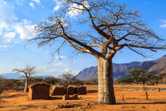 House surrounded by baobab trees in Africa Stock Images