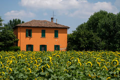 House surrounded by sunflowers Royalty Free Stock Photos