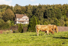 House surrounded by trees. In France village on a sunny day. You can see some cows Royalty Free Stock Images