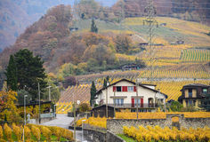 House in switzerland. This is a photo of houses in vineyard Switzerland Stock Images