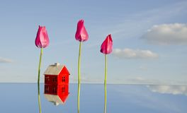 House symbol and tulips on mirror Stock Photography
