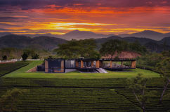 House and tea farm during sunset. Stock Images
