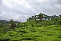 House at the tea plantation. Beauty of nature Stock Photos