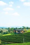 House on tea plantation. Royalty Free Stock Photos