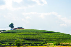 House on tea plantation Stock Images