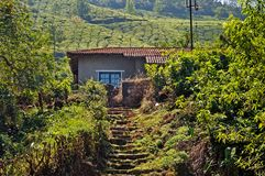 House in tea plantation Stock Photo