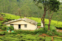 House in tea plantation Royalty Free Stock Photo
