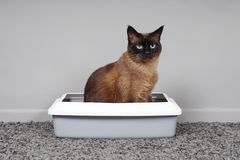 Free House-trained Cat Sitting In Cat Toilet Or Litter Box Royalty Free Stock Photos - 136885638