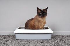 House-trained kattenzitting in kattentoilet of kattebak royalty-vrije stock foto's