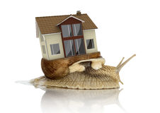 House Transport Snail Stock Photos