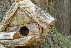 House on a tree Stock Image