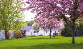 House, tree, meadow at spring time in America. In summer royalty free stock photos
