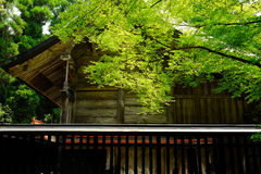 House and tree. Somewhere in Japan with House and tree Royalty Free Stock Photography