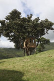 House on a tree Royalty Free Stock Image