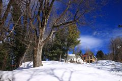 A house and trees in winter with snow. House trees winter snow snowland snowy home winters fall royalty free stock photography
