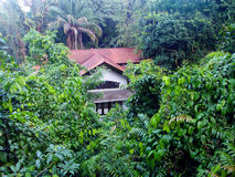 House in tropical forest. Away from the madding crowd - a photograph showing a beautiful white colonial heritage house in Singapore, southeast asia, located Stock Images
