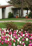 House with Tulips Stock Images