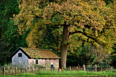 House Under A Big Tree. An old dutch house under a huge beautiful tree in autumn Stock Photo
