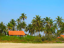 House under the palm trees Stock Photo