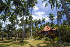 House under the palms Royalty Free Stock Images
