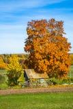 House under the tree Stock Photos