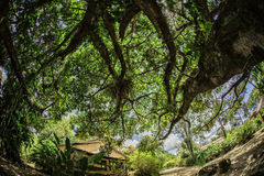 House under tree perspective Royalty Free Stock Photography