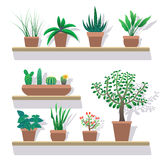 House vector plants in pots flat icons set. Stock Photography