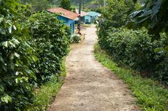 House in a Vietnamese village on a coffee plantation. Toning Stock Image