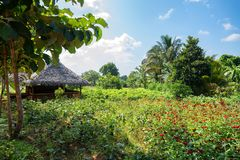 House in village in Sri Lanka. Small house and green garden with flowers in village rural landscape in Sri Lanka Royalty Free Stock Photos