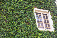 House with vine Royalty Free Stock Photos