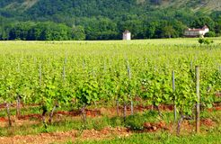 House in vine yard, south of France Royalty Free Stock Images