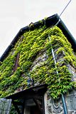 House Vines in town of St Nectaire, Auvergne, France Stock Photo